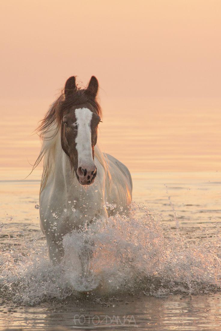Foto Zdanka, horse, by the beach, hest, water, splashes, sunset, sunrise, beauty, beautiful, gorgeous