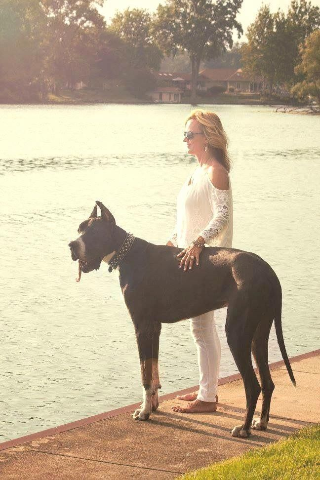 Discover The Affectionate Great Danes Pups And Kids Greatdanefans