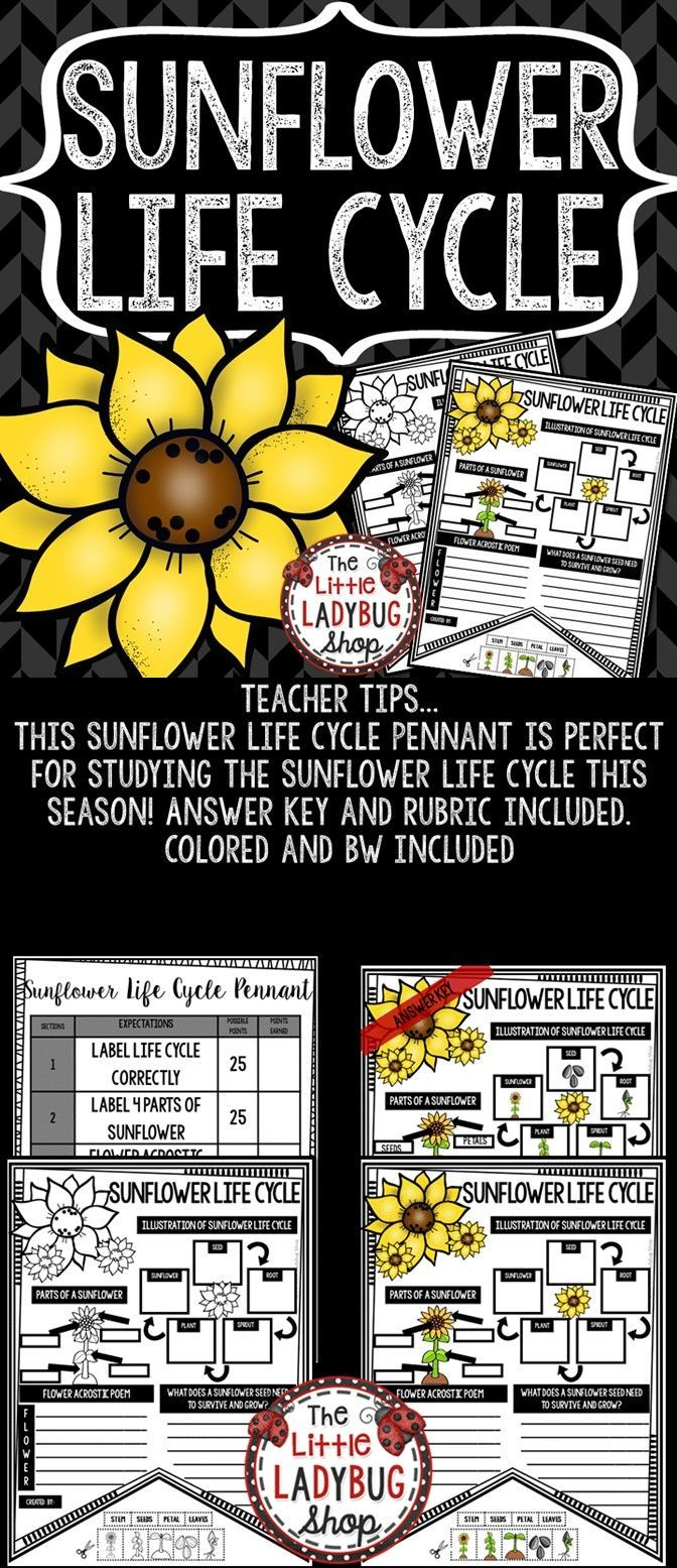 Sunflower Life Cycle Activity Pennant Print & Go with these Pennants! These Life Cycle Posters are perfect for a quick interactive activity to study the Life Cycle. Your students will love researching and using these! They will be perfect to display after completion.