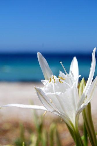 Corsica Flowers Garden Love