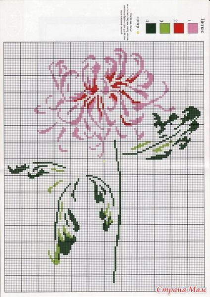 splendid rose