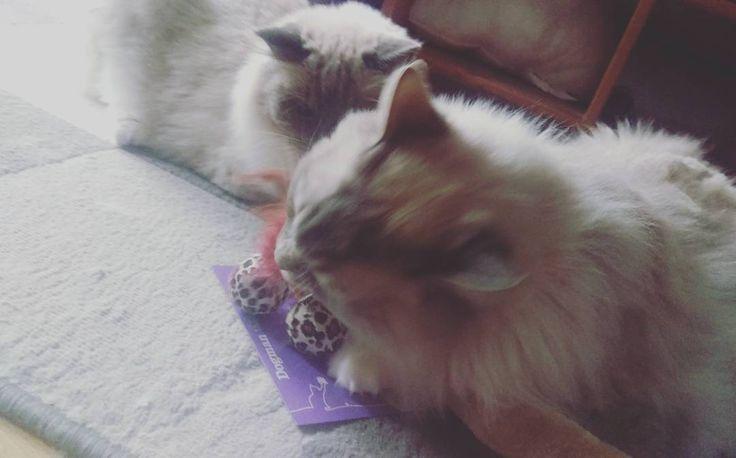 Se det här fotot av @jullesmamma på Instagram • 4 gilla-markeringar