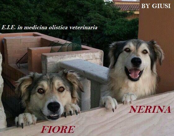 Estratti IdroEnzimatici il TOP in medicina olistica veterinaria via @elicats