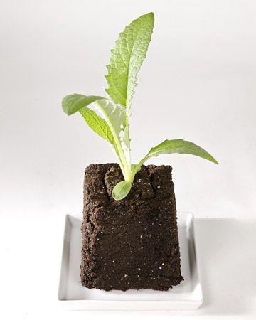 Seed Starting 101: Growing Plants, Start 101, Start Seeds, Vegetables Gardens, Seed Starting, Seeds Start, Martha Stewart, Gardens Guide, Vegetable Garden