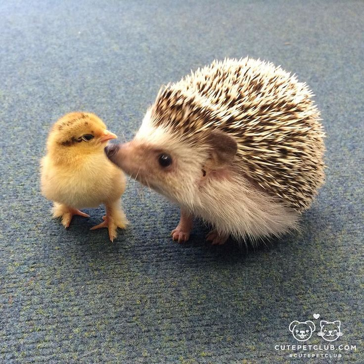 From @ shaymin_spikes: Good friends come in all shapes and sizes! #cutepetclub [source: http://ift.tt/2a22K99 ]