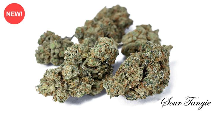 Sour Tangie Marijuana (Sativa) Sour Tangie is a delicious sativa cross between hard-hitting Sour Diesel and the popular strong citrus-tasting bud Tangie. At 22% THC, it delivers an absolutely intense burst of creative energy and motivation. Upon the bag's first opening, you experience a fruity explosion of tangerine and earthy citrus scents. When smoked the smell carries over and it has an incredible earthy, tangerine citrus taste.