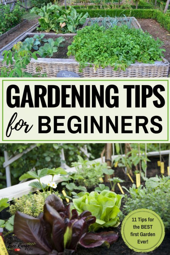 Beginners Garden Tips Vegetable Vegetablegarden Howgardening