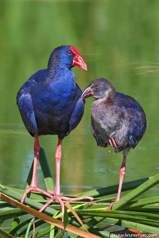 Birds by Bruno Maia