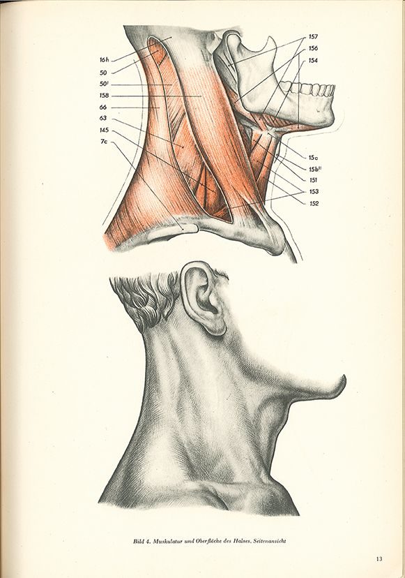 Ausgezeichnet Was Anatomie Oberfläche Galerie - Anatomie Von ...