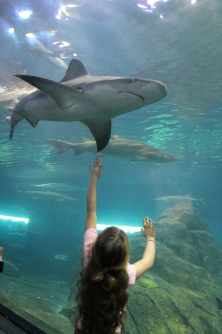 Before you pack up and head off to the (amazing) Adventure Aquarium in Camden for the day, here's everything you need to know to make the most of your trip.