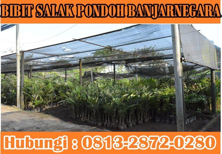 Menerima Pesanan Bibit Salak Pondoh banjarnegara. Pemesanan HUB : 081-328-720-280 (Bpk. H. Subambang) Aktif 24 jam nonstop.