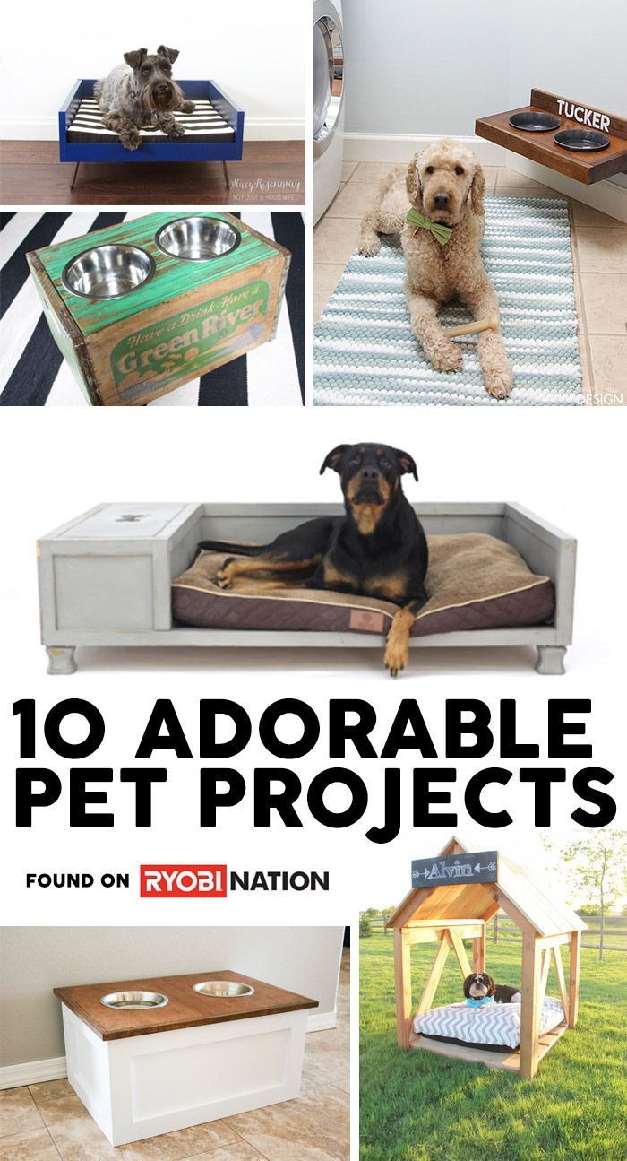 10 Awesome Eat & Sleep Pet Projects DIY
