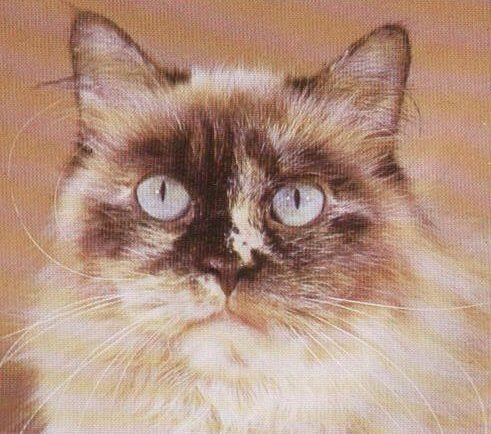 chewable flea medicine for cats