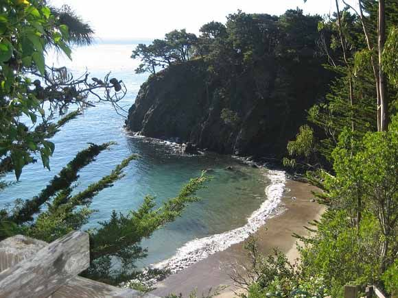 Anchor Bay Beach Ca Redwood Forests Meet The Ocean At