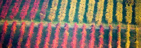 #lambrusco #wine