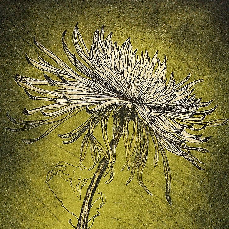 Spider Mum Etching Green bleed print edition of 57 by HelenGotlib
