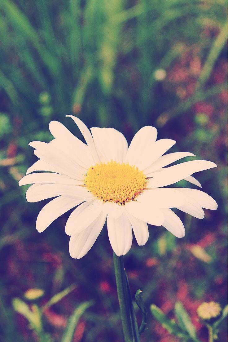 Flowers  Sammie Tillman
