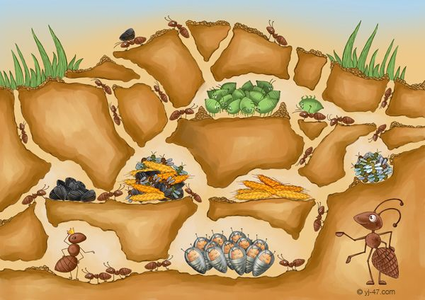 муравьи несут каплю - Поиск в Google