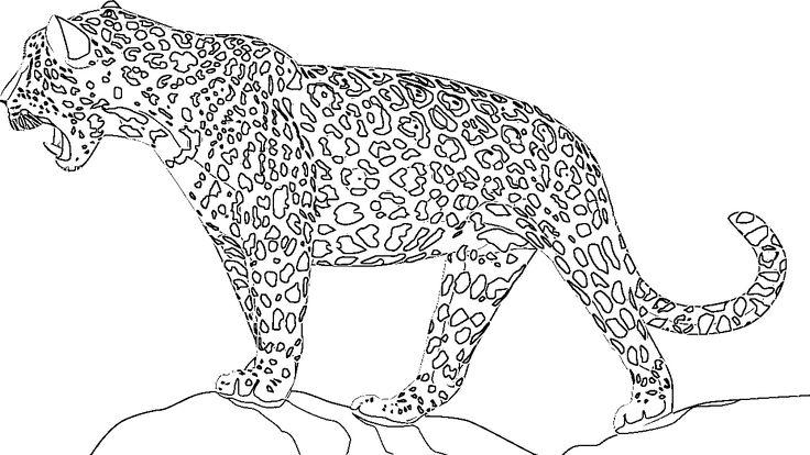jaguar e type coloring pages - photo#21
