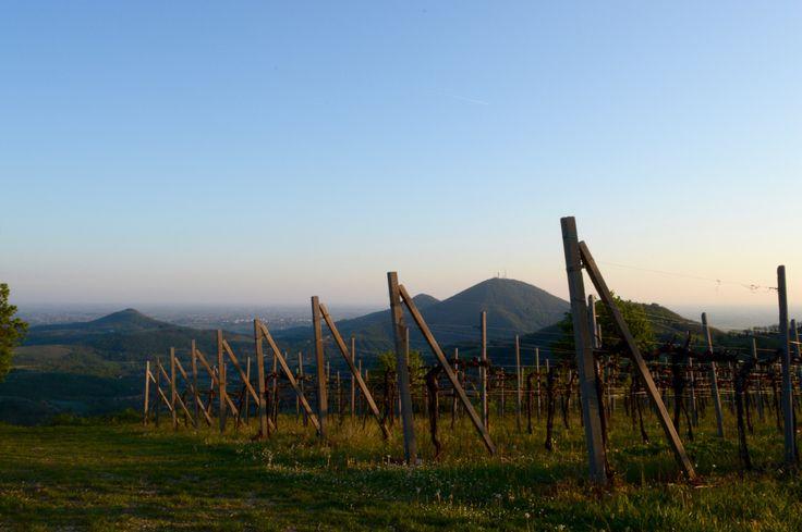 Sentiero Monte Fasolo (N* 12)