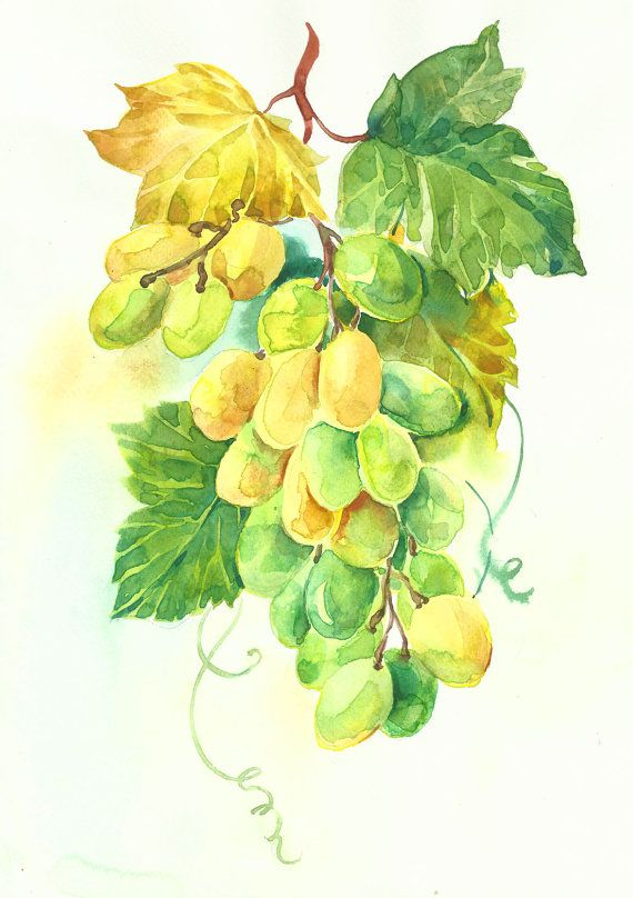 Bunch of green grapes by MarinaMarkizova on Etsy