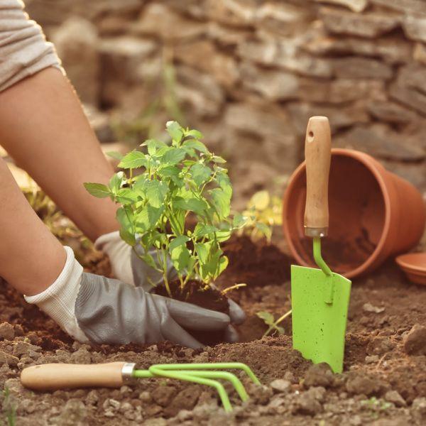 Comment jardiner avec la lune ? Le calendrier lunaire de 2020 | Calendrier lunaire jardin, Quand ...