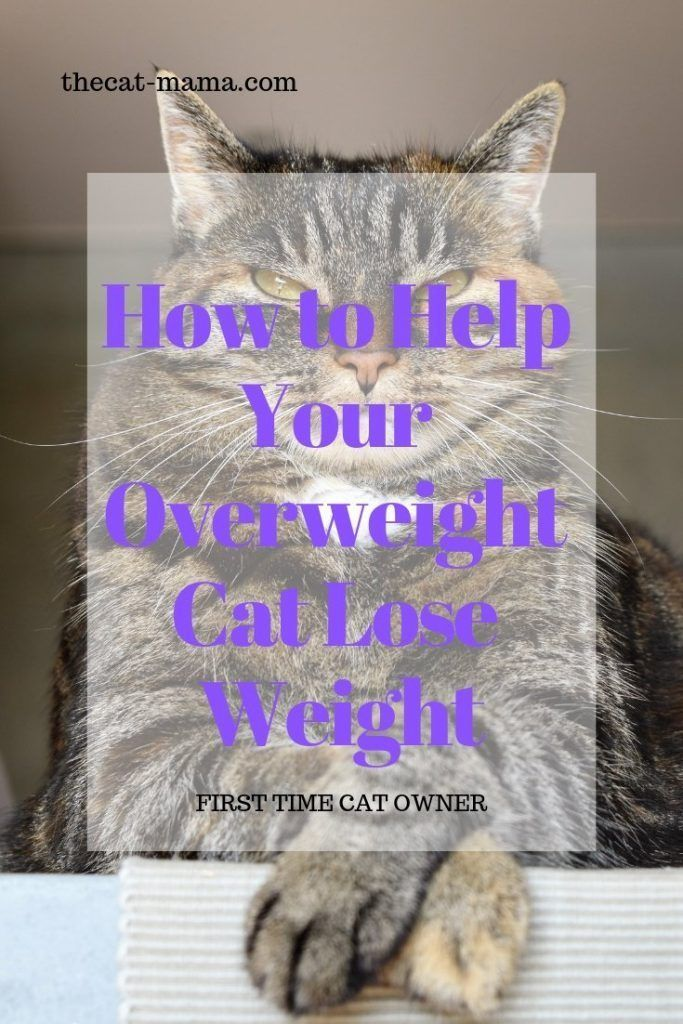 How To Get My House Cat To Lose Weight