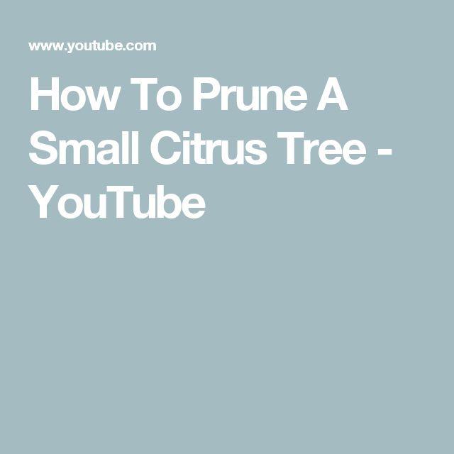 best 25 citrus trees ideas on pinterest lemon tree plants meyer lemon tree and orange tree. Black Bedroom Furniture Sets. Home Design Ideas
