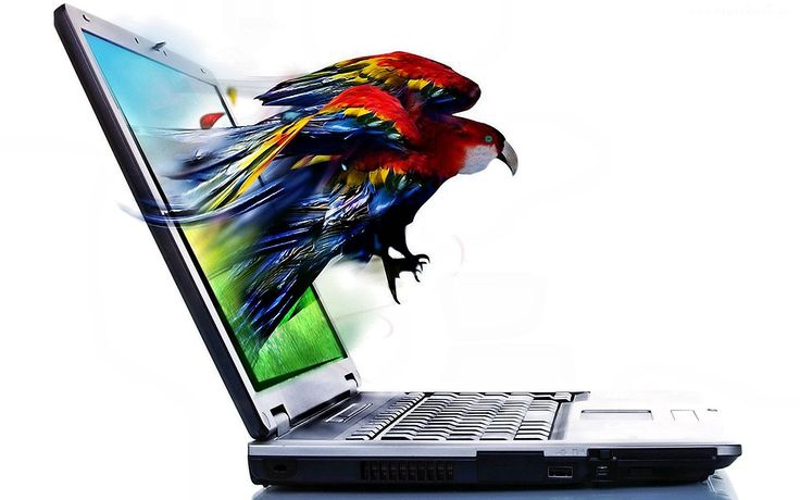 Papuga, Komputer, 4D