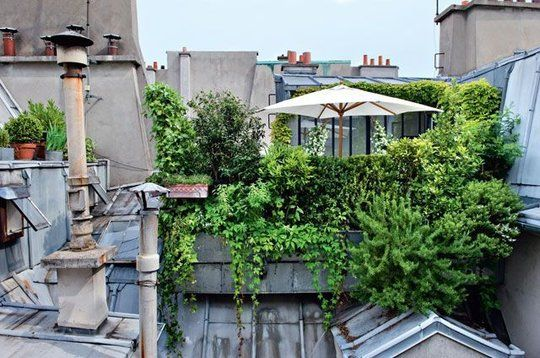 25 best ideas about lush green on pinterest hedges for Roof terrace definition