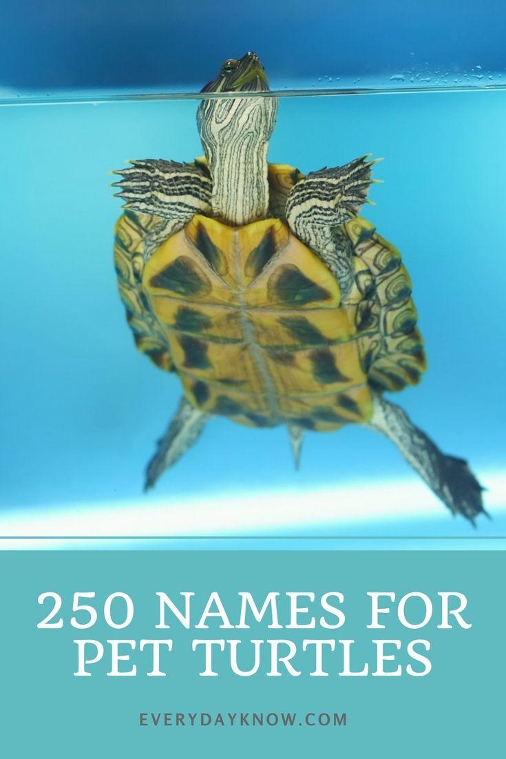 250 Names For Pet Turtles Pet Turtle Pet Names Cute Pet Names