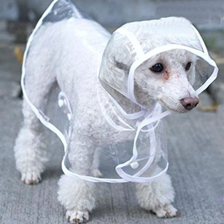 AIGUMI Waterproof Puppy Raincoat Transparent PE Rainwear Clothes for Small Medium Dog Pet Clothes Teddy Golden Retriever Puppy Poncho Raincoat >>> Find out more about the great product at the image link. (This is an affiliate link and I receive a commission for the sales)