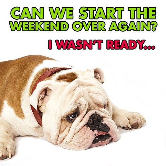 Can We Start The Weekend Over Again I Wasn T Ready Bulldog