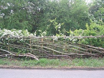 7 best living fences images on pinterest living fence fence and