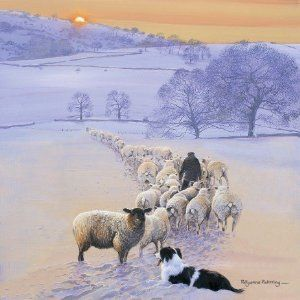 Shepherd's Delight Border Collie & Sheep Christmas Cards by Pollyanna Pickering
