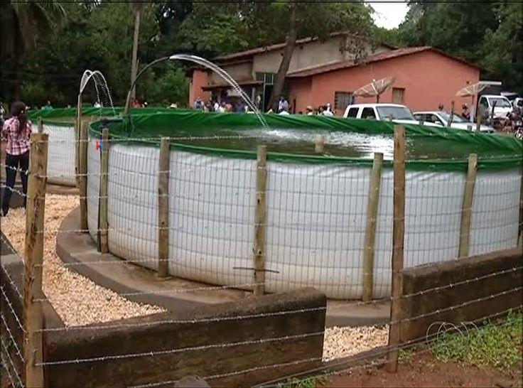 Novo sistema de piscicultura garante vantagens de custo-benefício para a criação