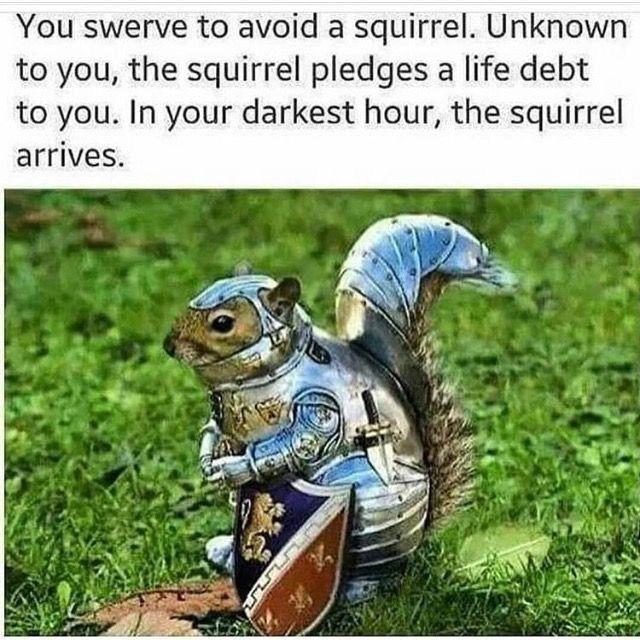 48++ Meme squirrel information