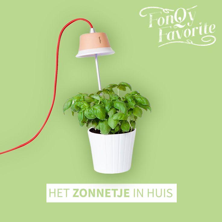 Deze slimme lamp zet jouw plantjes, groente en kruiden eens even goed in het zonnetje! #bulbolight #fonQyfavorite