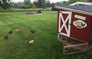 Which came first the chicken or the coop? In our case the chickens! Our first feathered friends arrived May 1rst.  They are, from what I understand, called a Golden Comet.  The father was a Rhode Island Red and the mother a Barred Rock.    We...
