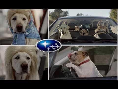 Top 10 The Best and Funny Subaru The Barkley Family Dog Car Commercials 2016 - YouTube
