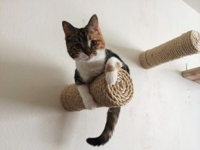 These cute, little floating climb-posts. | 18 Cat Products That Won't Cramp Your Home's Style