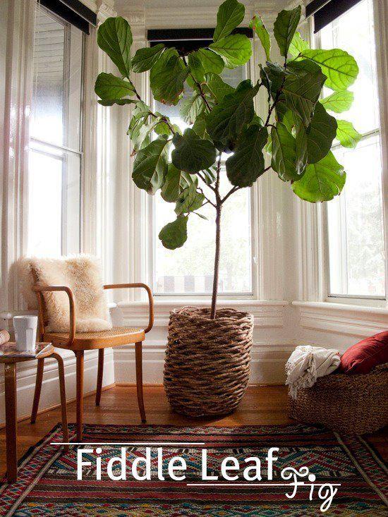 mejores 87 imágenes de decoracion en pinterest | espacios al aire