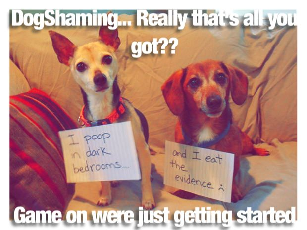 #DogShaming