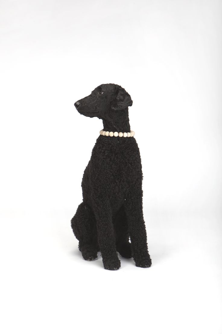 Standard poodle haircuts or of unless soft haircuts standard poodle - Thing _ Pet Collar Designer _ Dalia Mauricait Kalinauskas Model _ Standard Poodle Abra Kadabra Photography