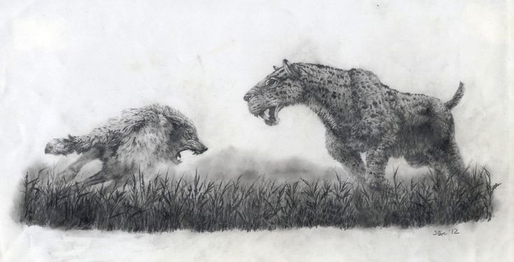 """Homotherium chasing off a dire wolf, by Steve White """"My first effort to write a book was the dramatised life of a pride of Smilodons, set in Ice Age North America about 25,000 years ago. I had planned to illustrate it myself and one scene featured a pride of Homotheres facing off a pack of dire wolves trying to steal the young mammoth the sword-toothed cats had killed."""""""