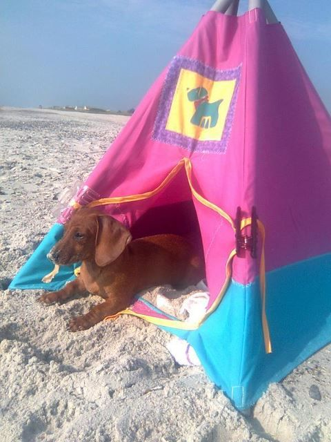 *a day at the beach End of summer dachshund