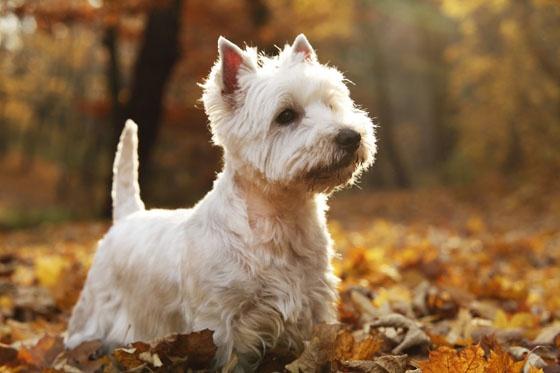 Karmy dla starszych psów:  http://www.kakadu.pl/Karmy-dla-psow/karmy-dla-starszych-psow.html