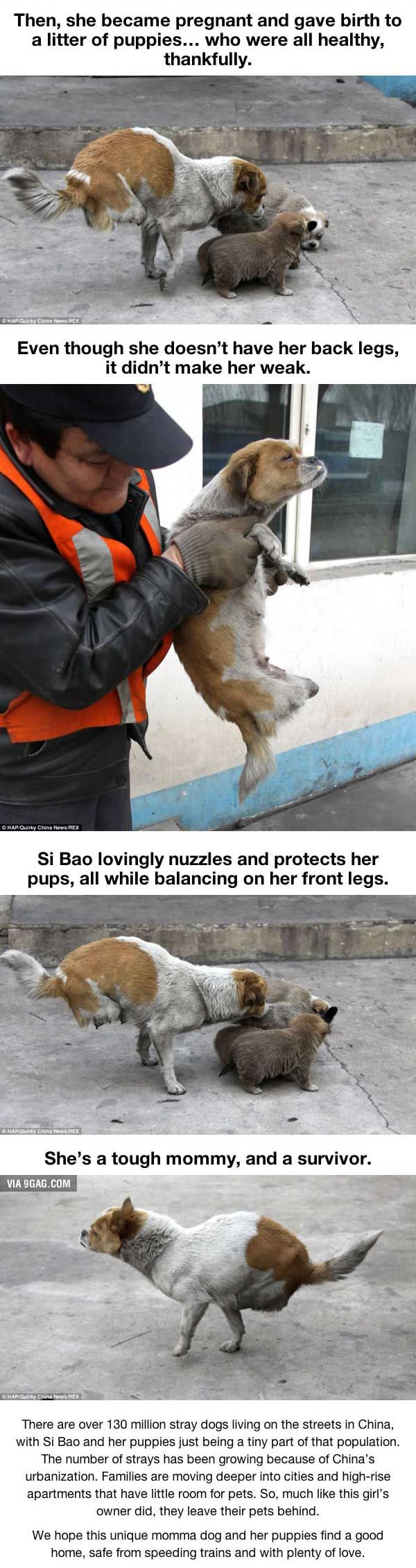 joindarkside » Seeing What This Stray Dog Did Will Hit You Hard!