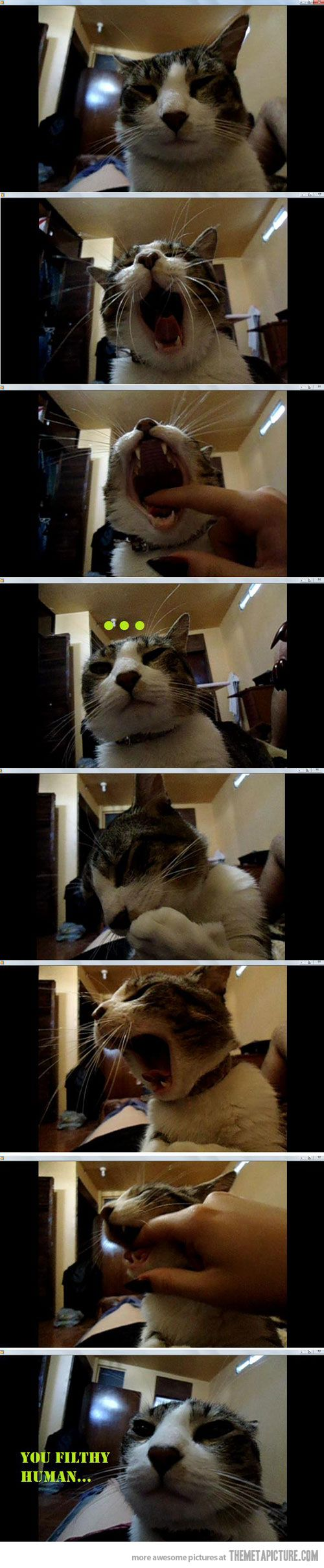 best meong images on pinterest funny animals funny kitties and
