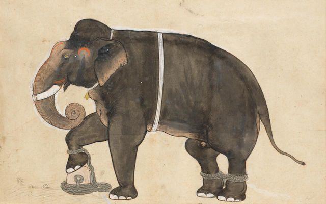 A chained elephant Ajmer or Sawar, circa 1730